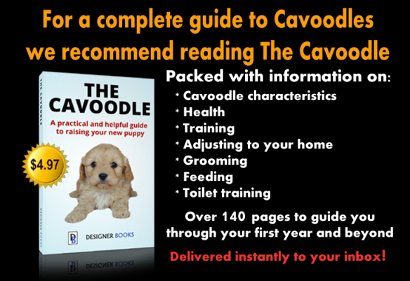 The Cavoodle Book