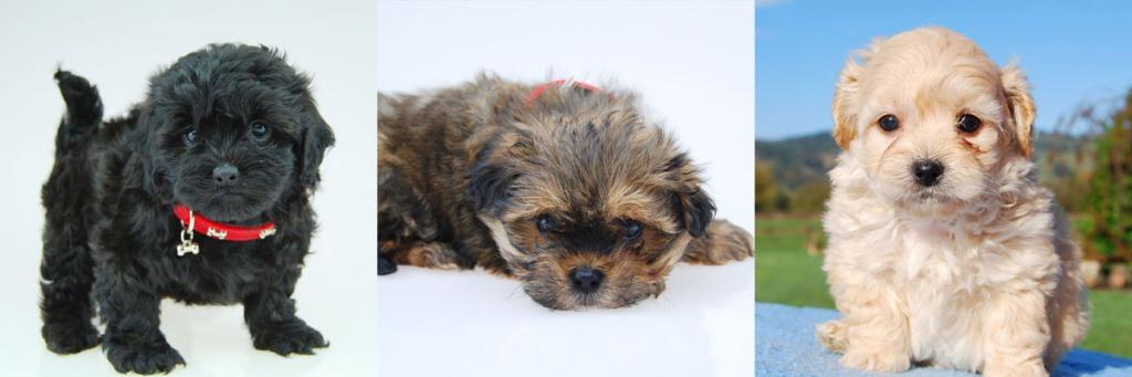 Moodle Designer Dog Info