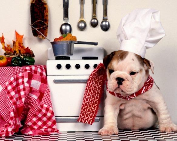 Bulldog puppy chef