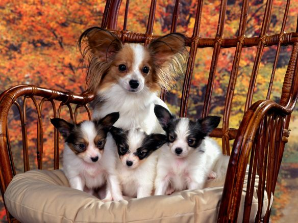 Mum and puppies on a chair