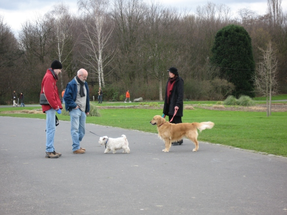 Dogs meeting at the park