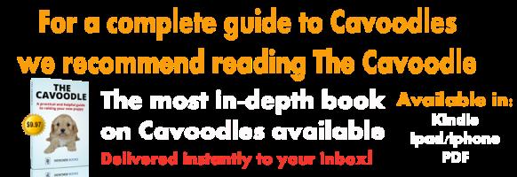 Cavoodle Book